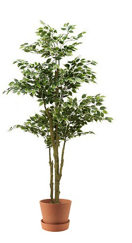 Large size plant